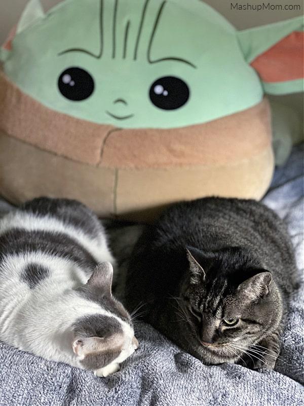 Baby Yoda watching over cats