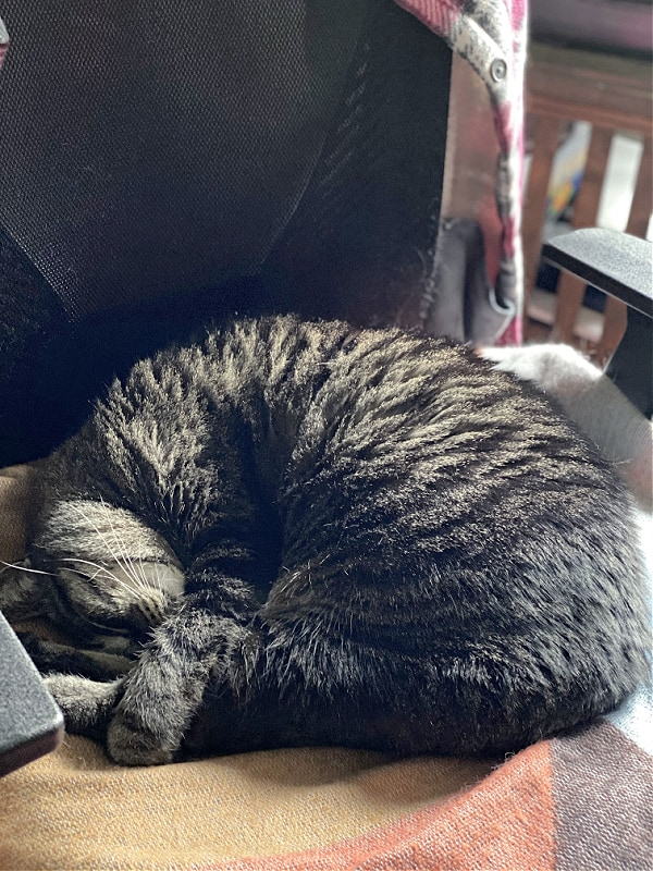 brown cat sleeping on a chair