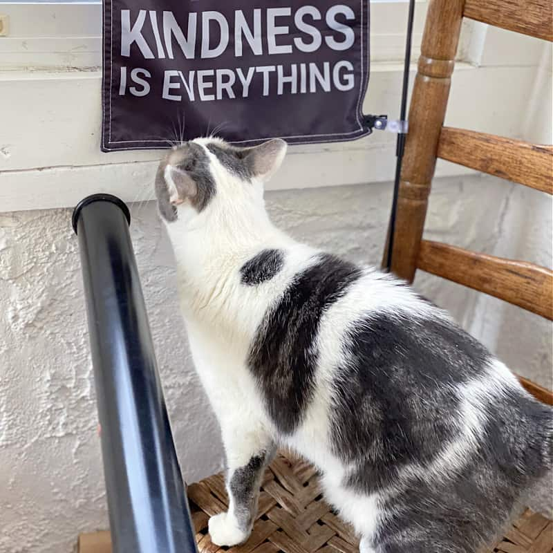 kindness is everything with a cat