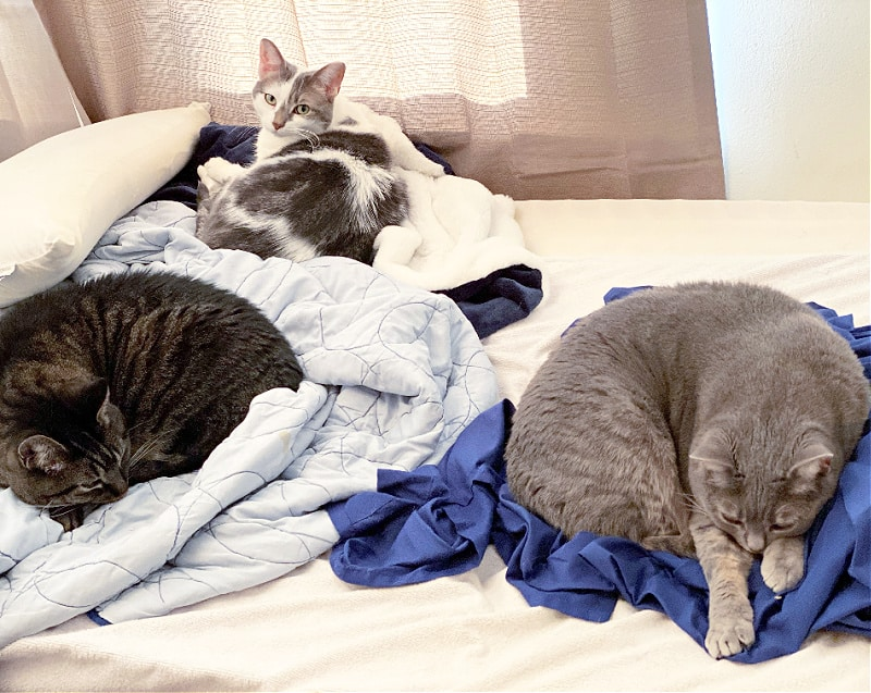 three cats sleeping on a bed
