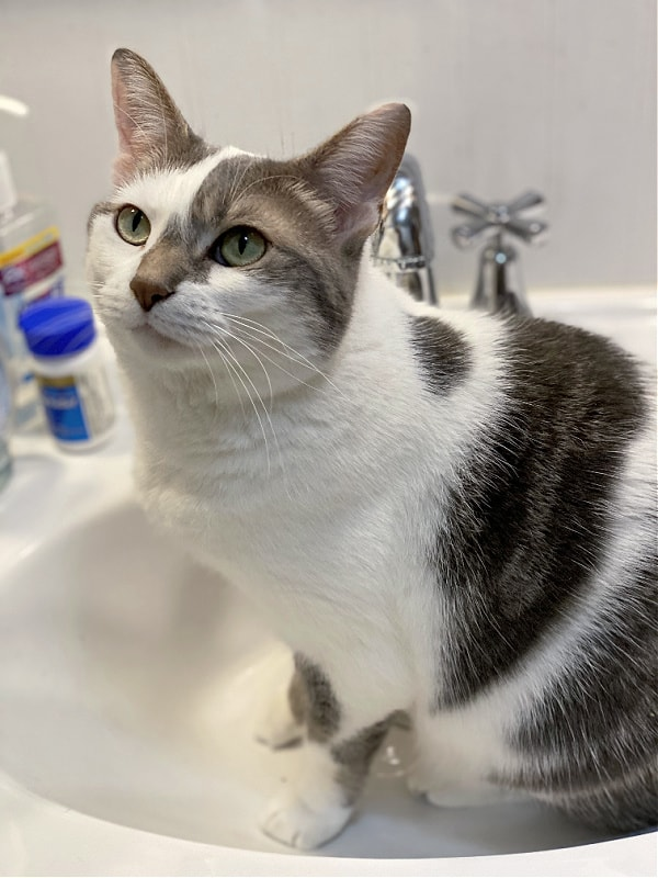 bad kitty lucy in the bathroom sink