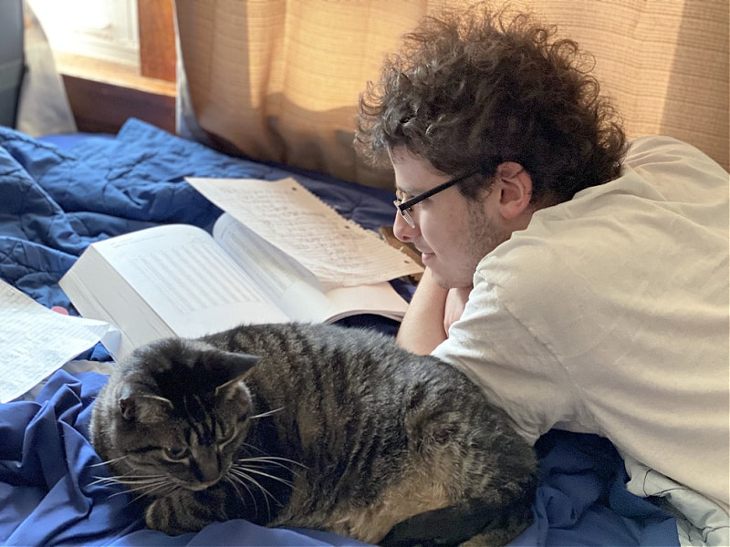tabby cats are homework companions
