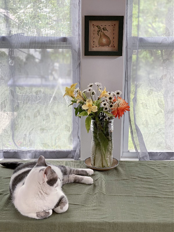 bad kitty lucy and flowers