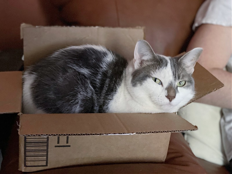 bad kitty lucy in a box